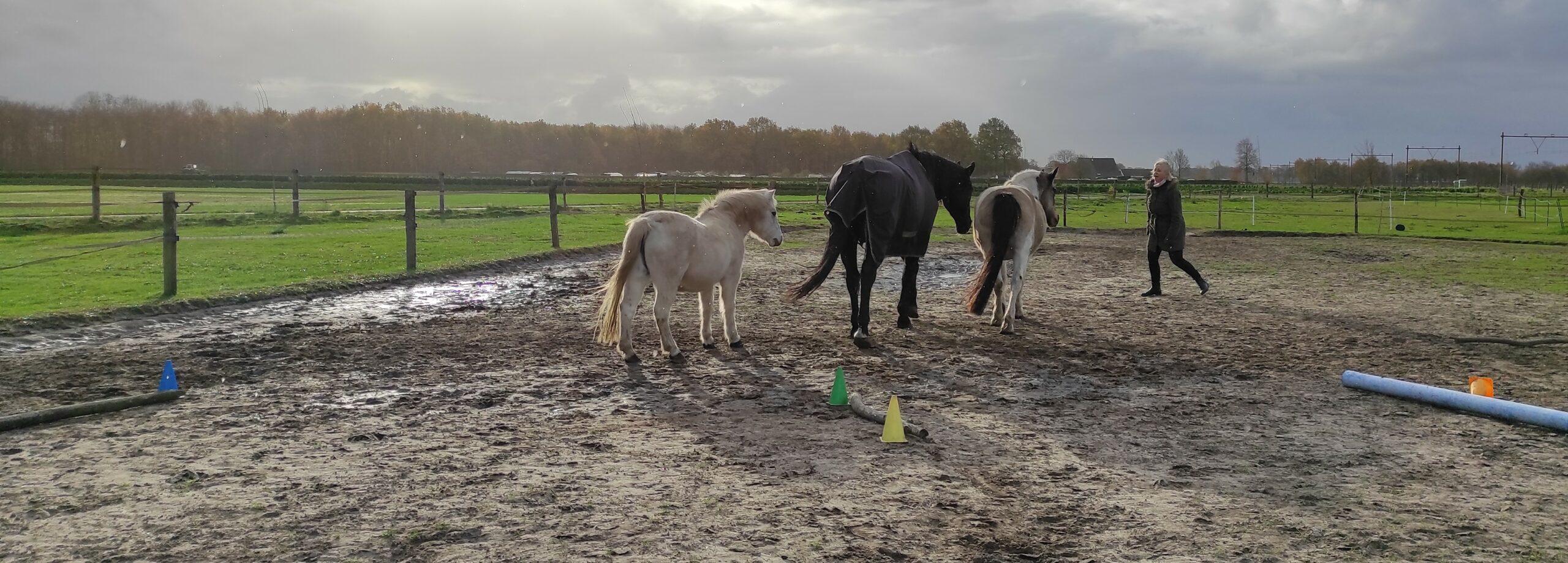 de paarden van inzicht door ervaring