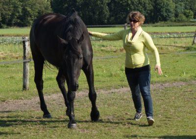 coaching met paarden- inzicht door ervaring