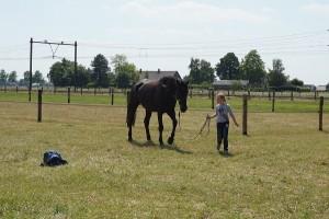 activiteit met Niels - 'Inzicht door ervaring' coachen met paarden