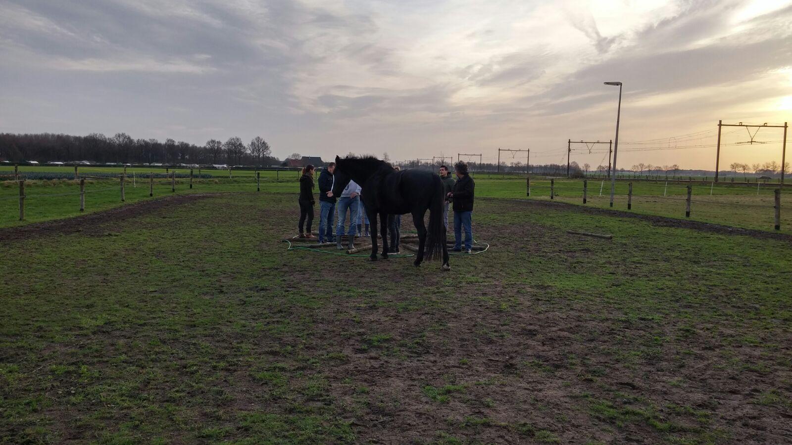 teamcoaching met paarden- inzicht door ervaring