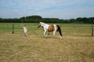 doelgericht- Ínizcht door ervaring' coachen met paarden