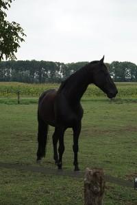 Niels - 'inzicht door ervaring' coachen met paarden