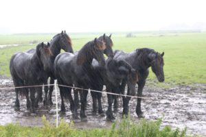 paarden in de regen- inzicht door ervaring