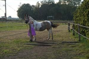 paard zwaait met staart 'inzicht door ervaring' Coachen met paarden