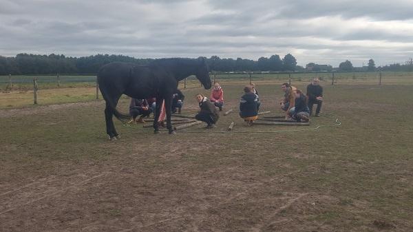 teambuilding met paarden- inzicht door ervaring