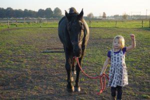 de kracht van coachen met paarden
