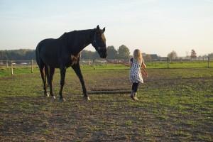 vastlopen met paard - inzicht door ervaring